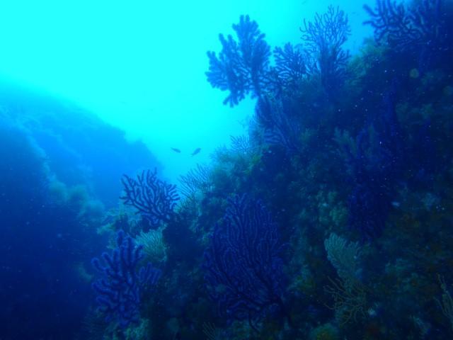La gabiniere (sud) sous l'eau