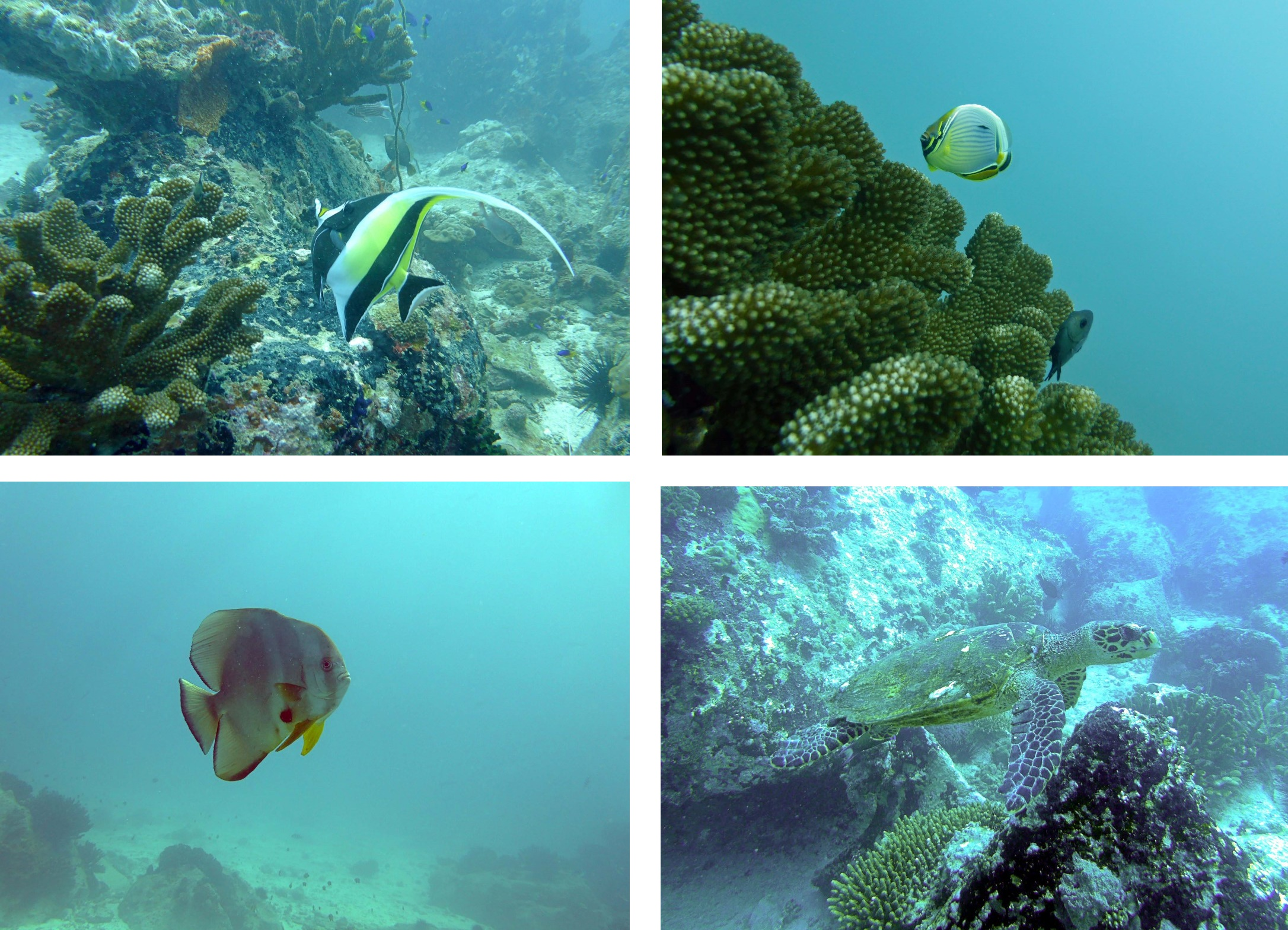 seychelle poissons 2