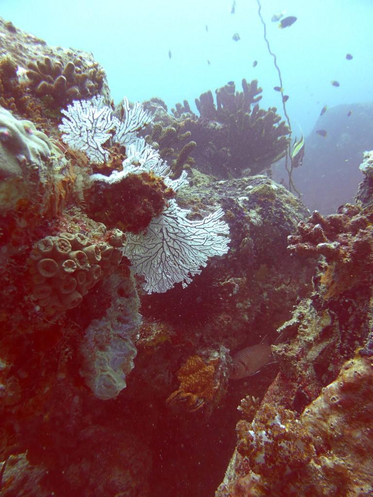 Paysage corallien (bis)