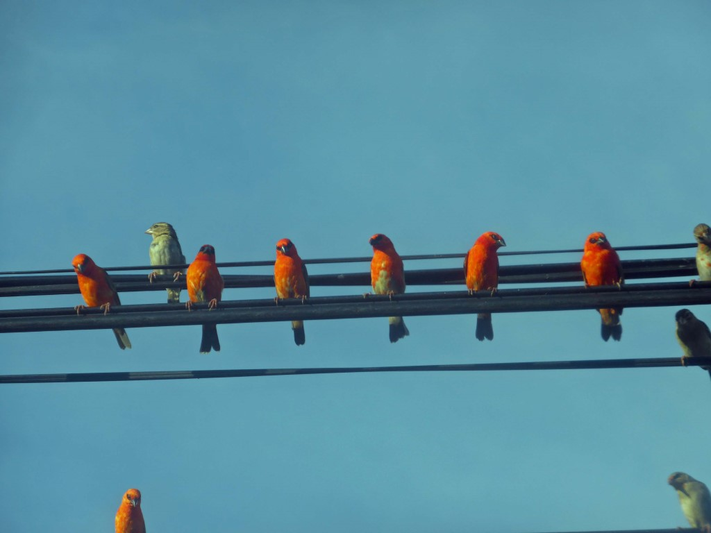 Les oiseaux de Praslin