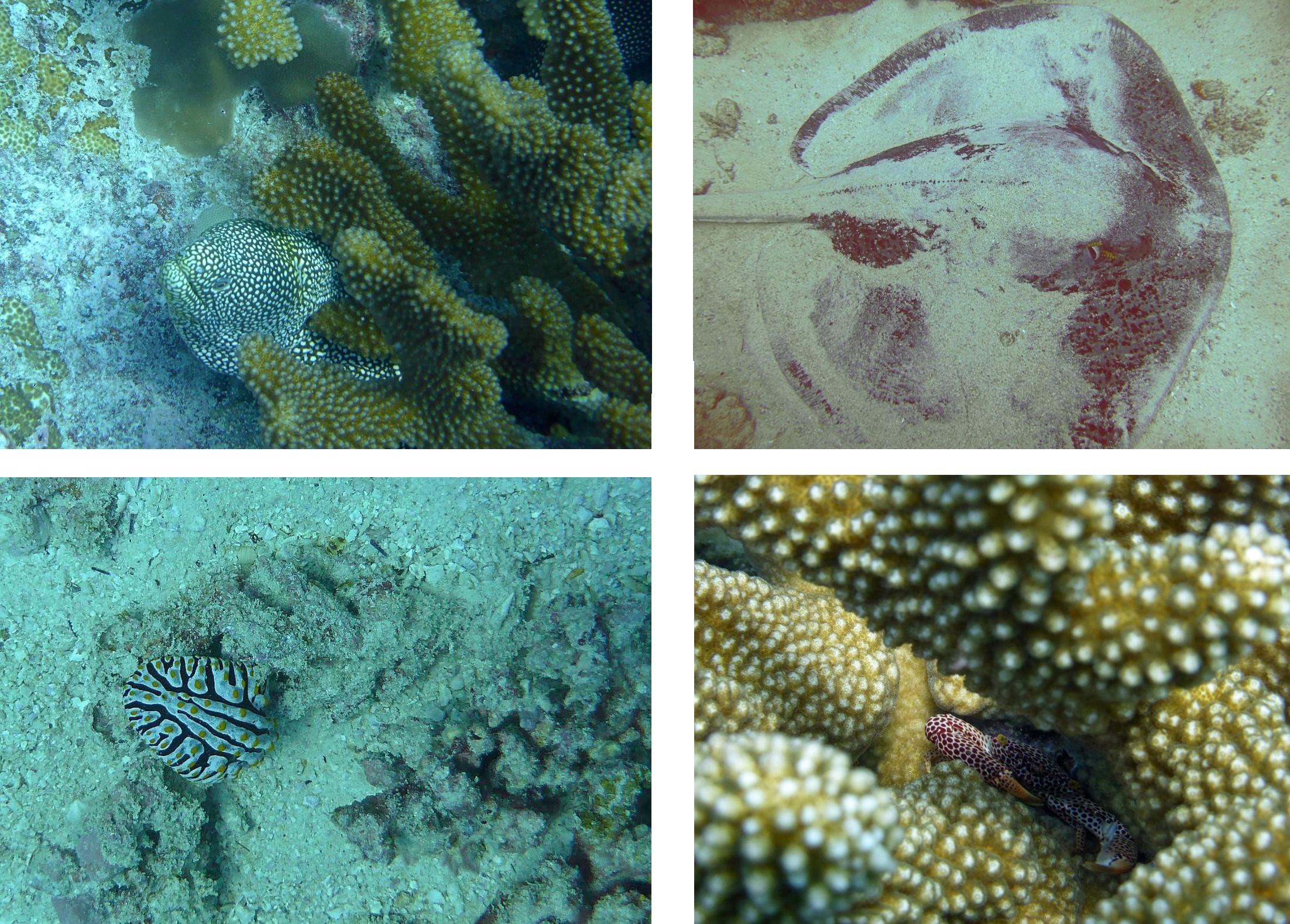 seychelles poisson 3
