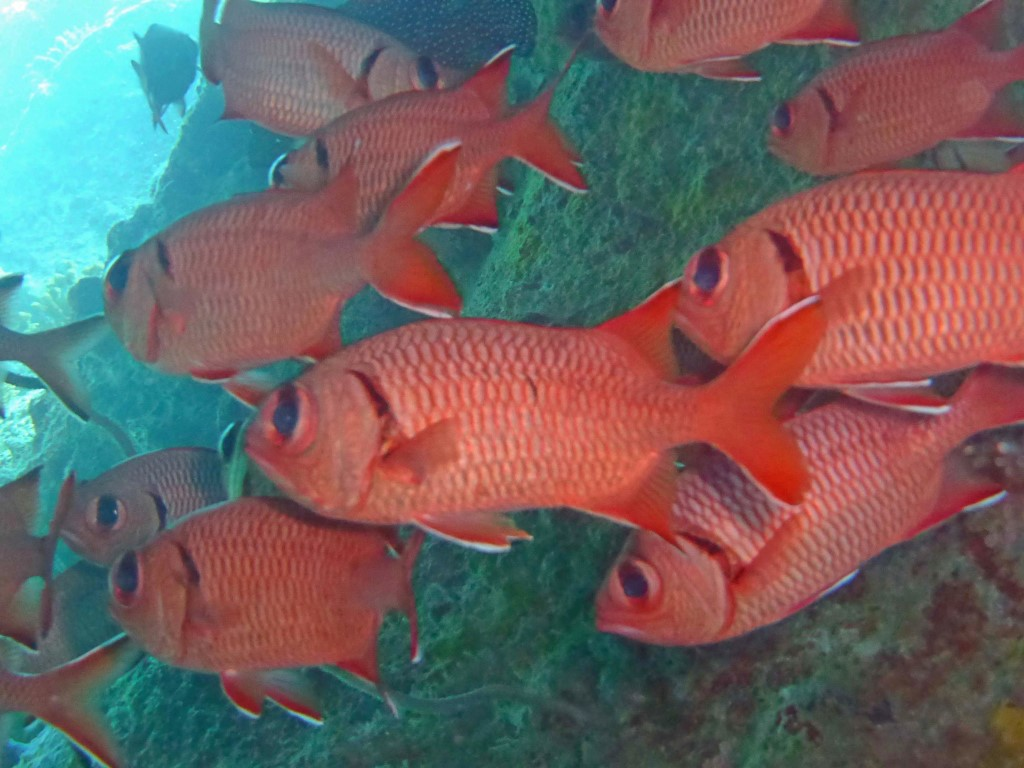 Banc de poissons rouges
